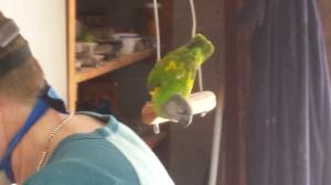 Curious Sidney